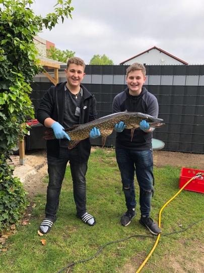Hecht 110 cm / 18 kg, gefangen 01.05.2019 in der Oker von Martin Brychcy und Justin Baars